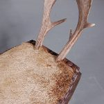 1950's Rare small chair with foot stool with antlers and deer legs