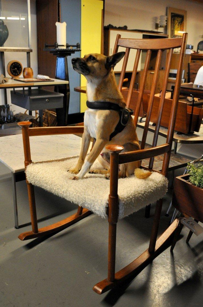 Fabulous Design Dog Chico On A Rocking Chair Vintage Midcentury Frankydiablos Diy Chair Ideas Frankydiabloscom
